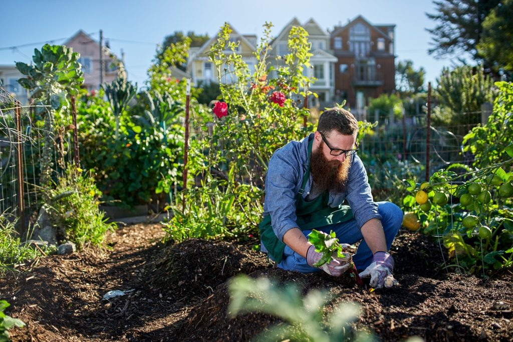 Man gardening