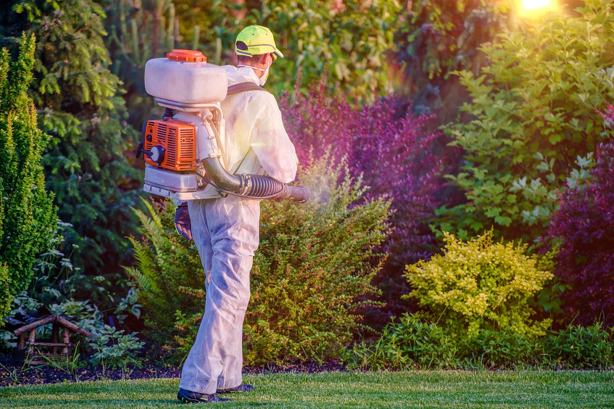 man spraying dormant oil to the trees
